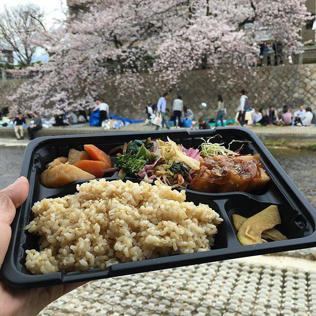 昼は芦屋川夜は夙川です阪神間ええ天気でふ